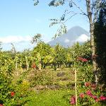 vulcano view from Finca Montania sagrada