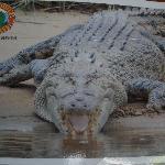 Krokodil auf dem Prospekt im Shop