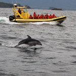 Clayoquot Sound Wildlife