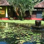 water Bodies inside the hotel..at the bck of our Villa
