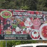 Within walking distance to the Big Strawberry Farm.