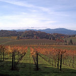 View from second vineyard