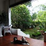 view from verandah to front garden
