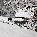 Swiss Inn Thumbnail