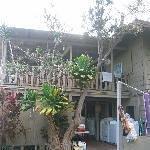 Pineapple Park - Kona Thumbnail