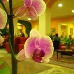 Columbia Terme Hotel Thumbnail