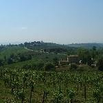 Fattoria Abbazia Monte Oliveto Thumbnail