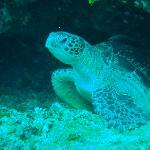 Turtle in bunaken