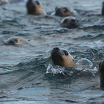 Sea lions swimming next to our boat