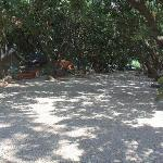 Nice location off the road in a mango orchard