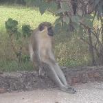 "cheeky monkey ""chillin !"""