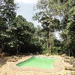 Swimming pool surrounded by the rainforest
