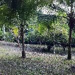 Photo de Garden Gate Guest House