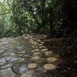 Walking path towards waterfall.