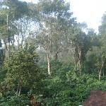 Ashiyana Estate - View from back of homestay