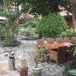 garden with terras