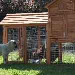 Chickens and pet lambs for kids to feed