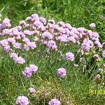 Pour les botanistes