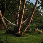 A charming hammock