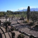 Small desert garden