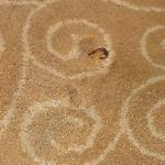 Dirty carpet with pumpkin seeds