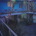 oooh lights. hummingbirds were pretty i guess