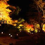 円通院庭園のライトアップ-その2-