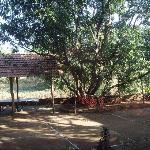 Badminton, TT, Machan on Mango Tree