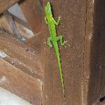 One of the many lizards