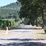 the road from sant' angelo in colle to tenuta il poggione