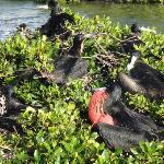 Birds on a mangrove island