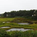 view from the deck - the marsh out to Nantucket Sound