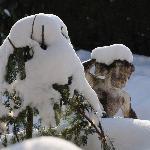 1. Bild vom verschneiten Garten