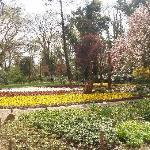 schön angelegte Blumenbeete
