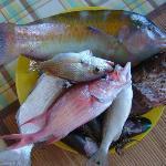 Pescado fresco listo para comer al estilo Margariteño