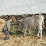 Photo of Agriturismo S'Ozzastru