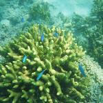 Traumhafte Korallen und Fische