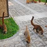 Coates roam the grounds, very cute