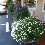 des fleurs partout!!