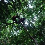 monkeys in the manuel antonio park