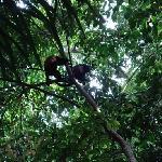 monkeys in the manuel antonio park