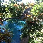 The sweet pool at Manoa Valley Inn