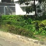 petit par-terre de plantes et fleurs a l'entree de la residence