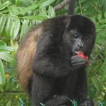 monkeys on the resort
