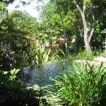 plunge pool suite, 5-Star in the truest sense, service, design, food, details…