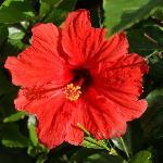Für Fauna und Floraliebhaber