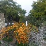 Central garden of the castle