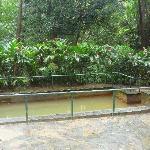 Original hot springs