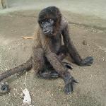 Franco, the monkey