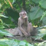 Lucas, our monkey